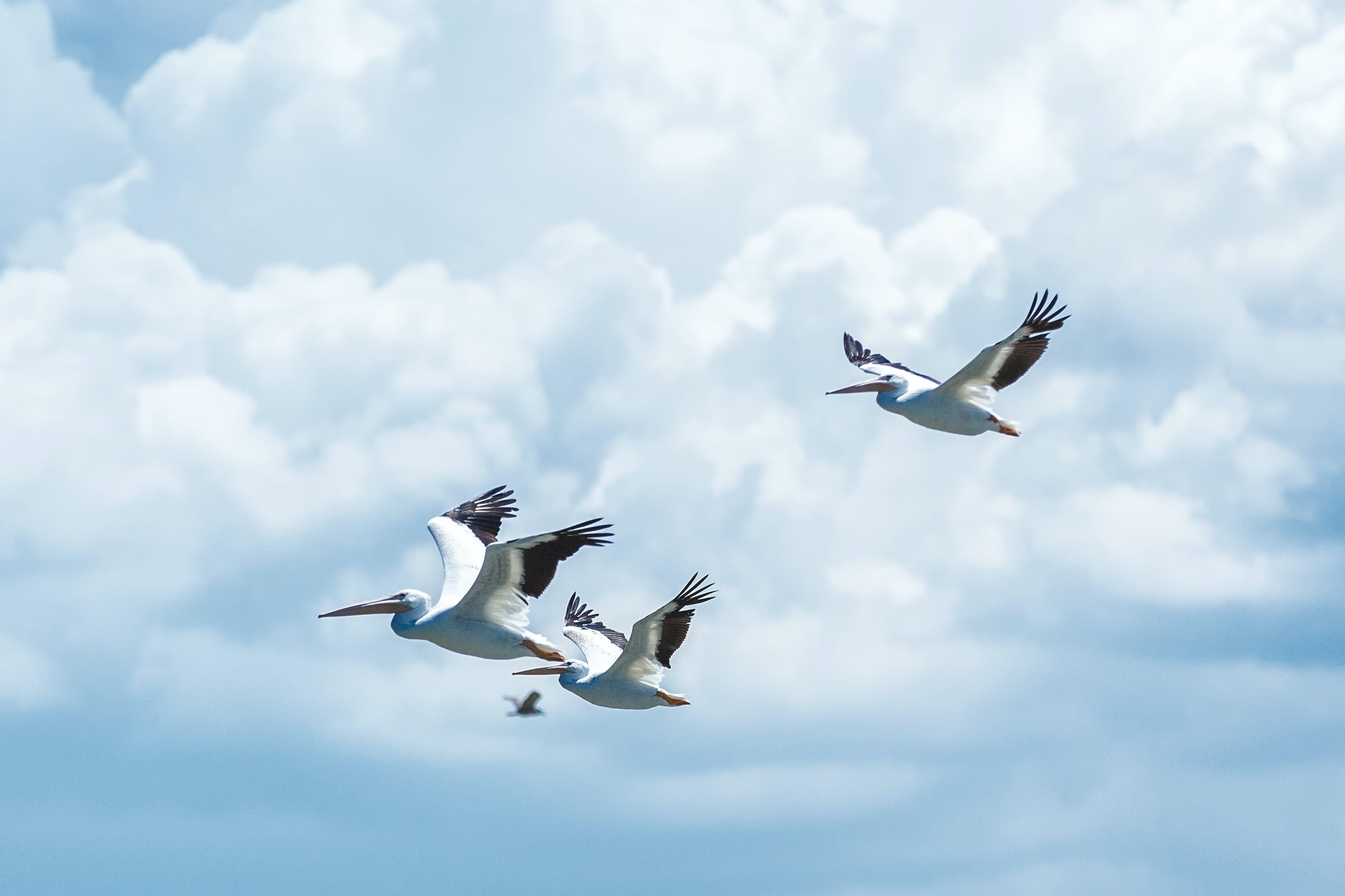 flying white birds under cloudy sky