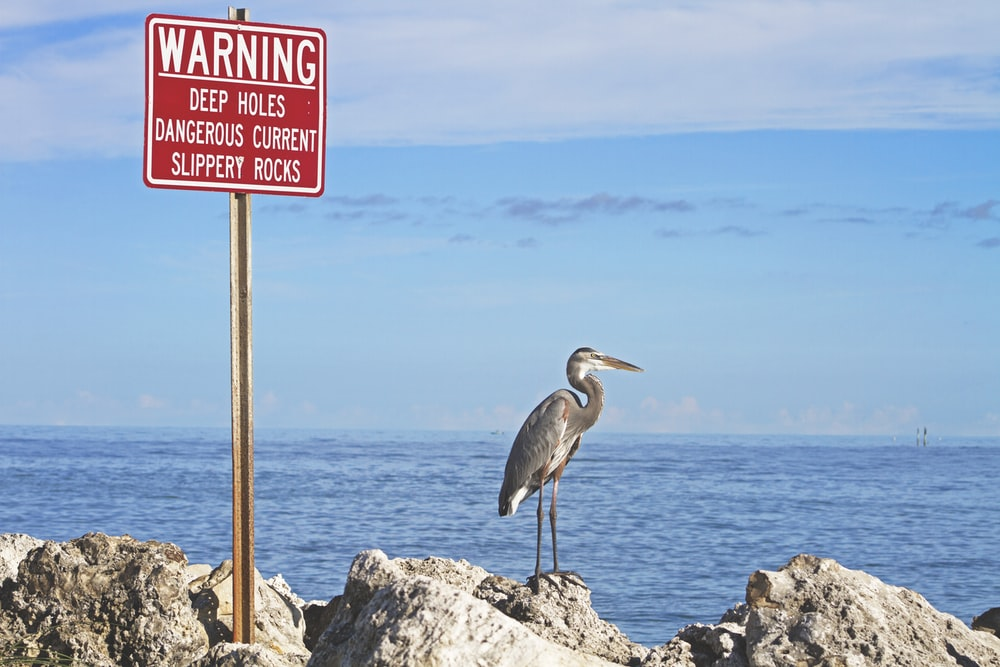 gray bird standing beside warning signage near body of water during daytime