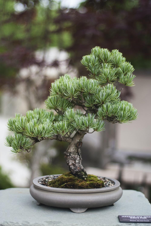 shallow focus photo of bonsai plants
