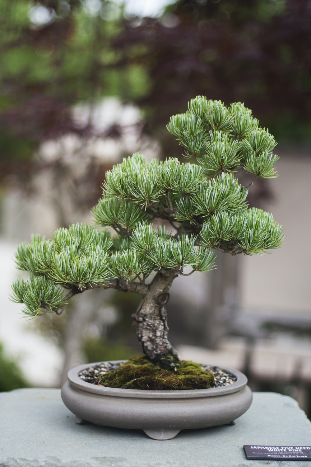shallow focus photo of bonsai plants