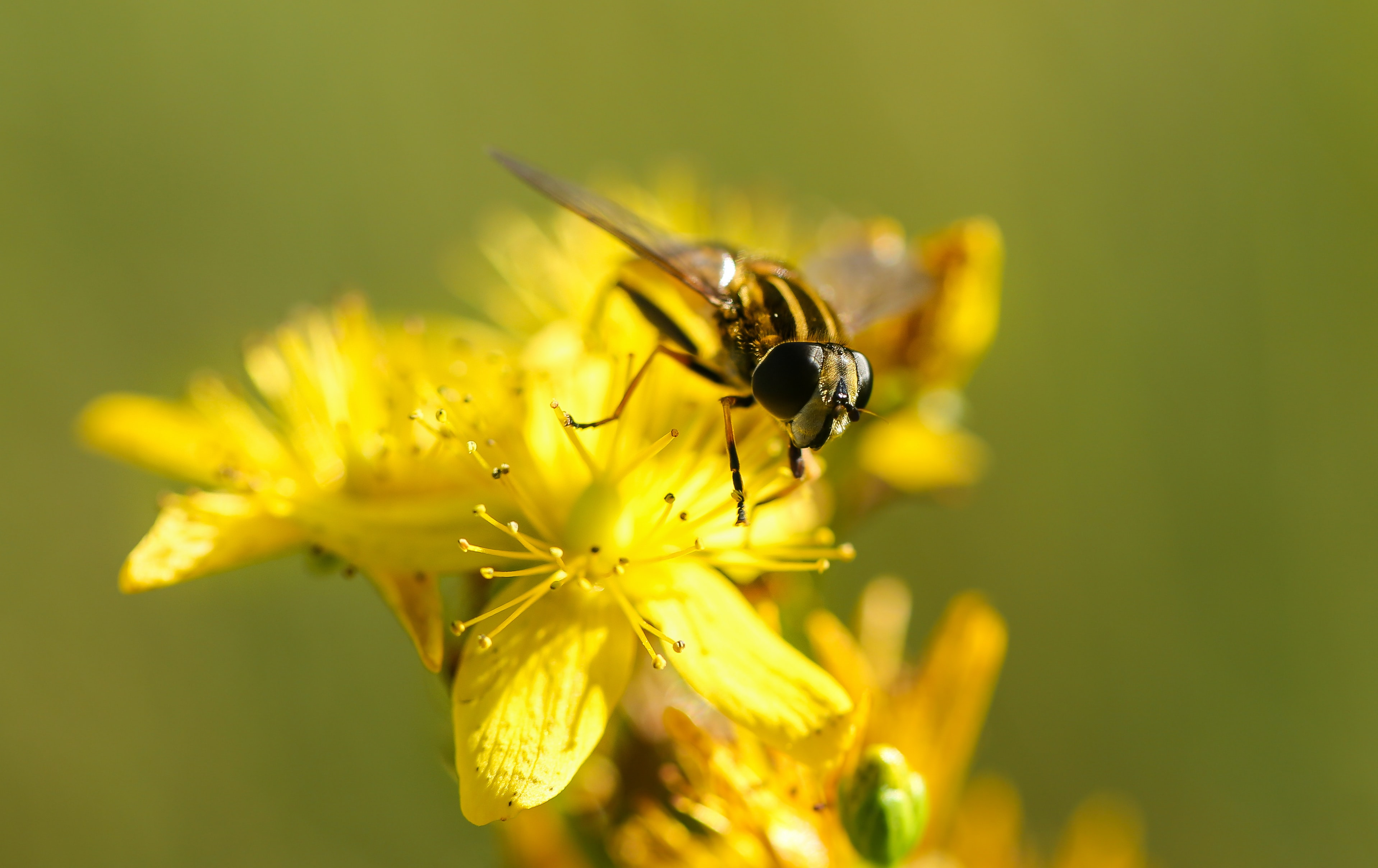 Bug perched on a yellow wildflower