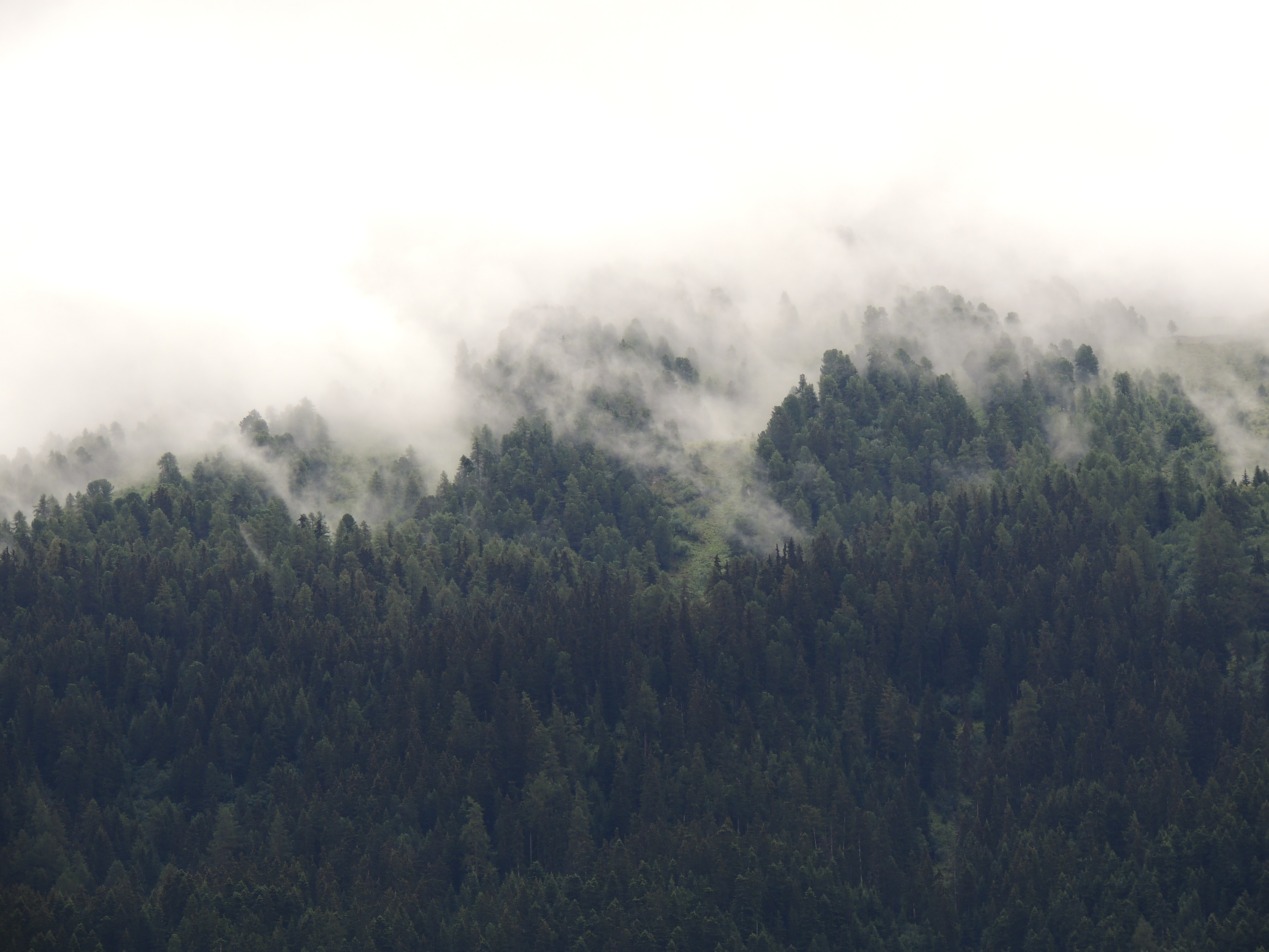 Mist rising up above a slope covered by woods in Savoie