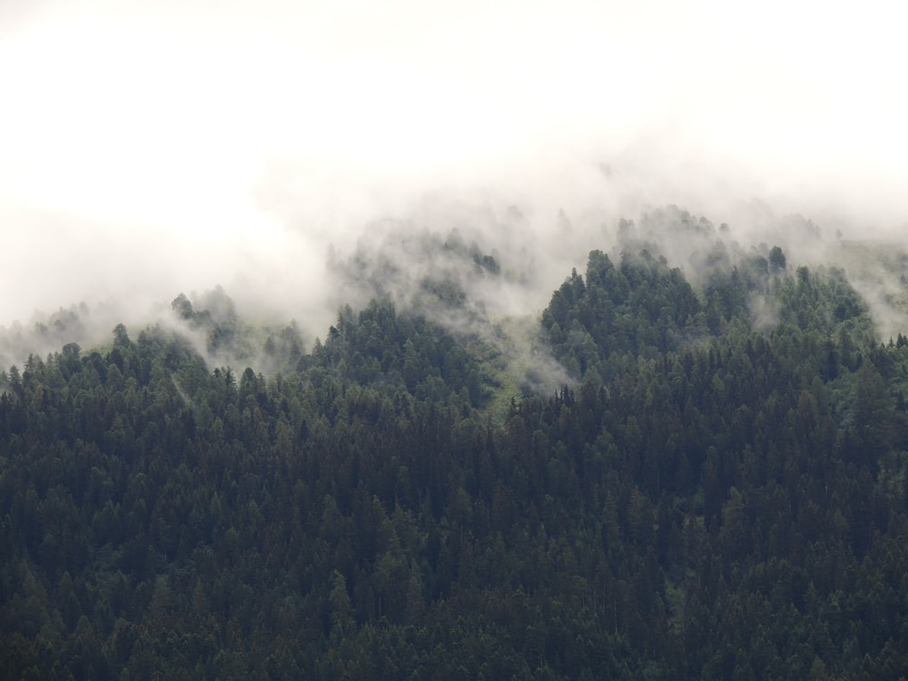 forest surround with fogs