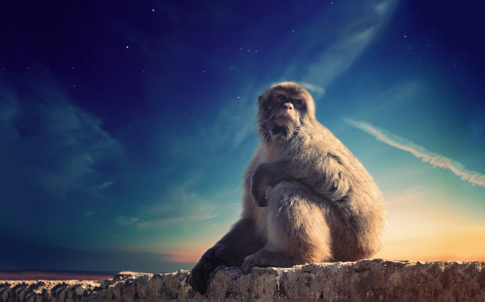 gray monkey sitting on concrete surface under blue sky