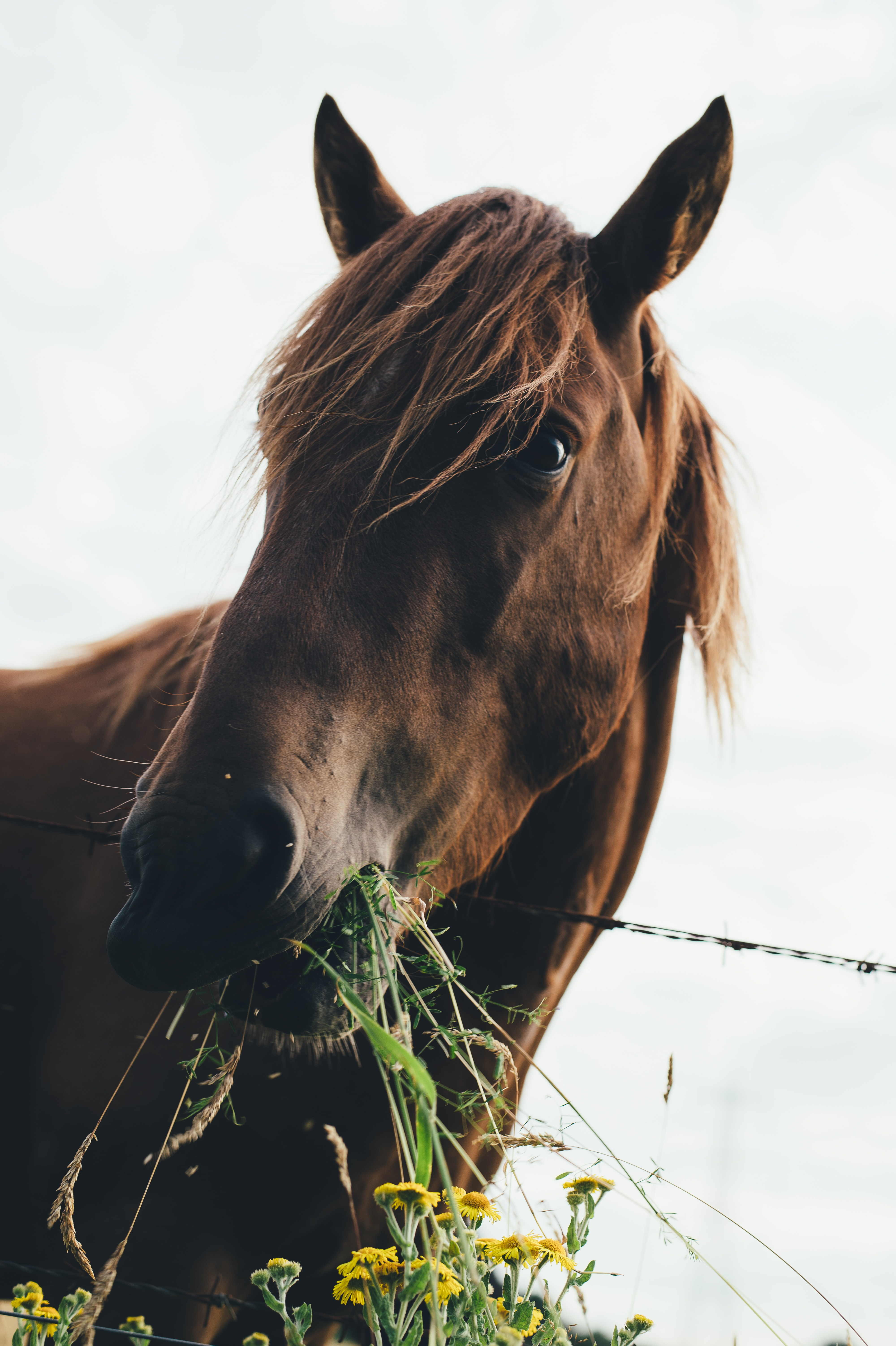 A low-angle shot of a horse chewing on a clump of grass
