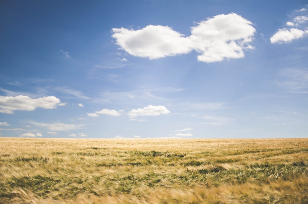 brown grasses under white clouds at daytime