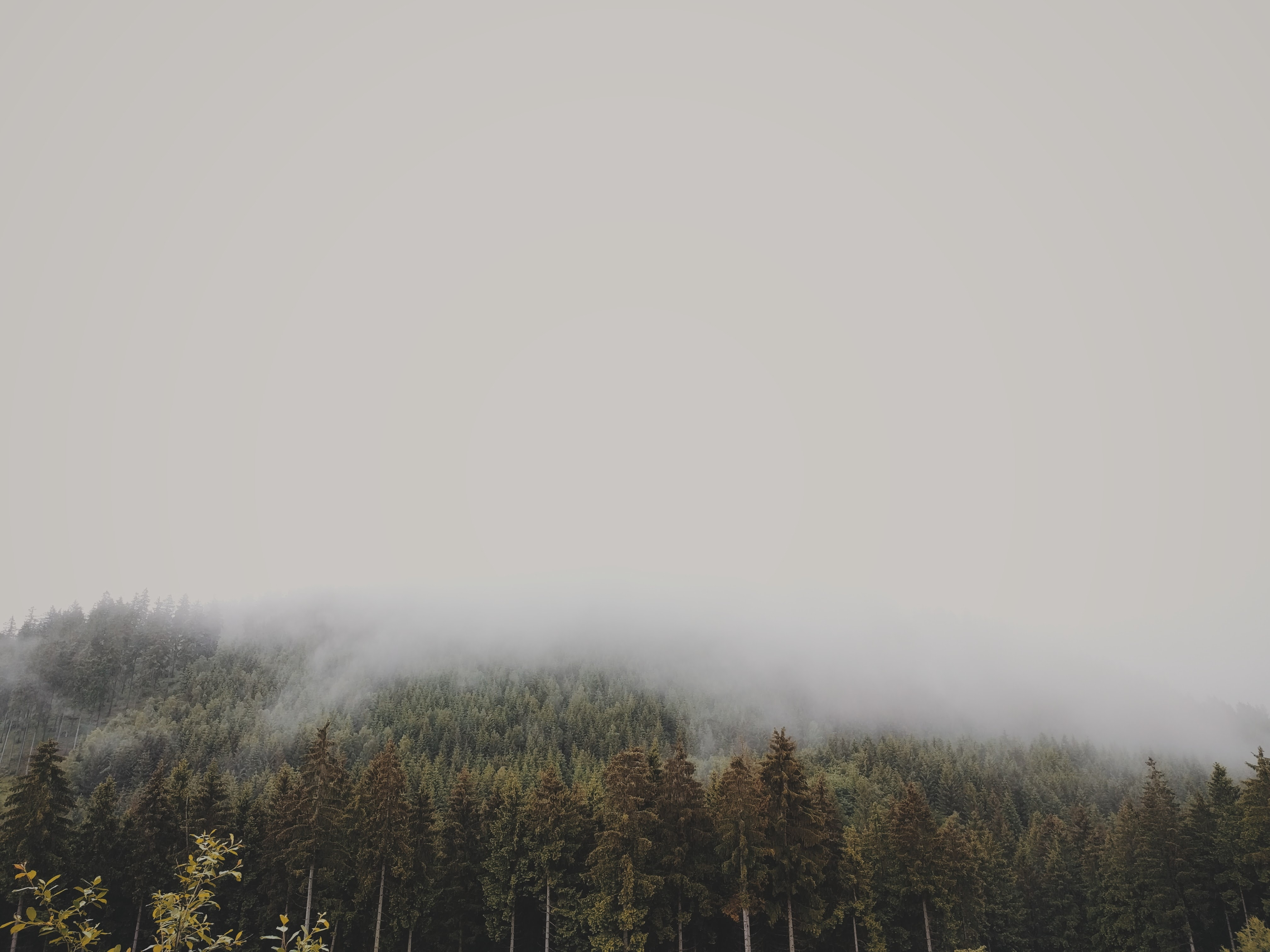 A thick fog descending from a wooded slope