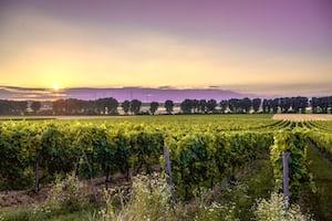 4606. Bor,szőlő, borászatok