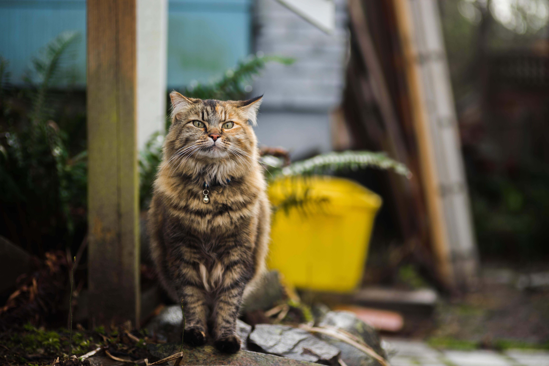 tortoiseshell cat sitting on rock