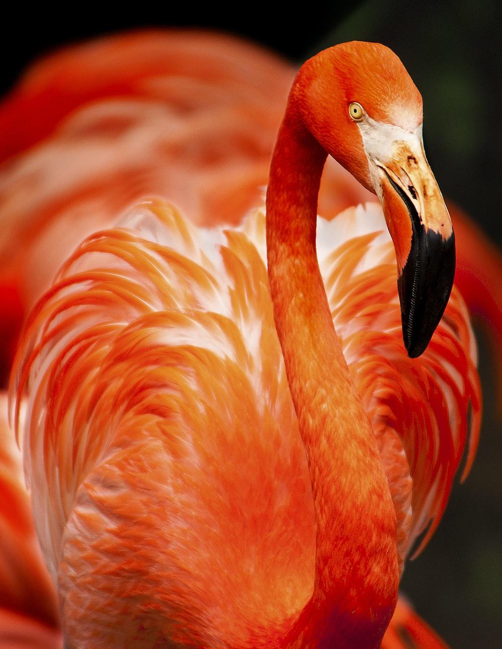 closeup photo of orange bird