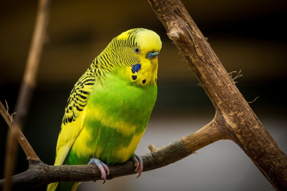 green and yellow bird standing on tree branch