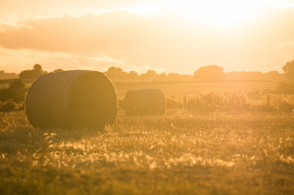 two rolled hay bales on grass field during golden hour