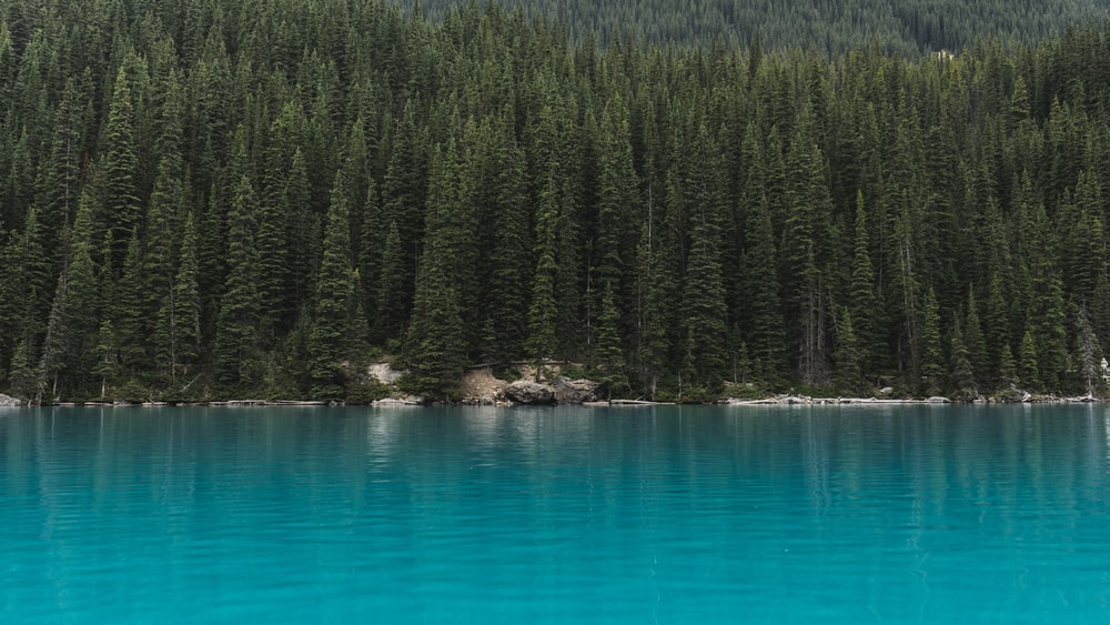 landscape photography of trees near body of water