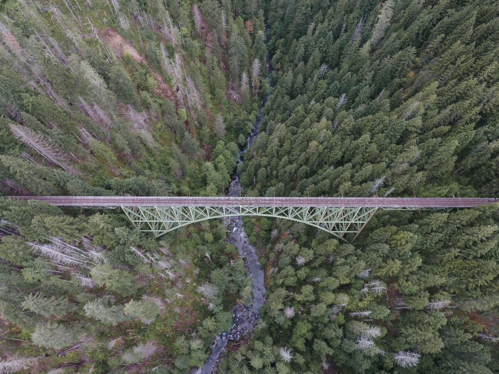 aerial photo of brown bridge and green trees