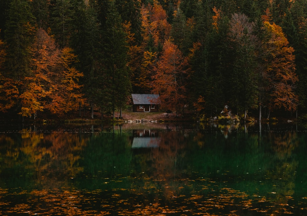 reflective photography of cabin in forest