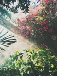 our home is full of love im glad to know  that when we're long gone the plants will continue to grow nature will retake our home and the love will live on  -Mel de la Paz nature stories