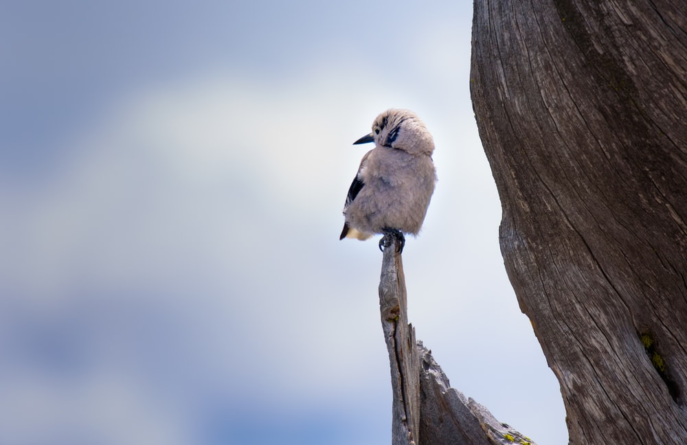 white bird perched on branch during daytime