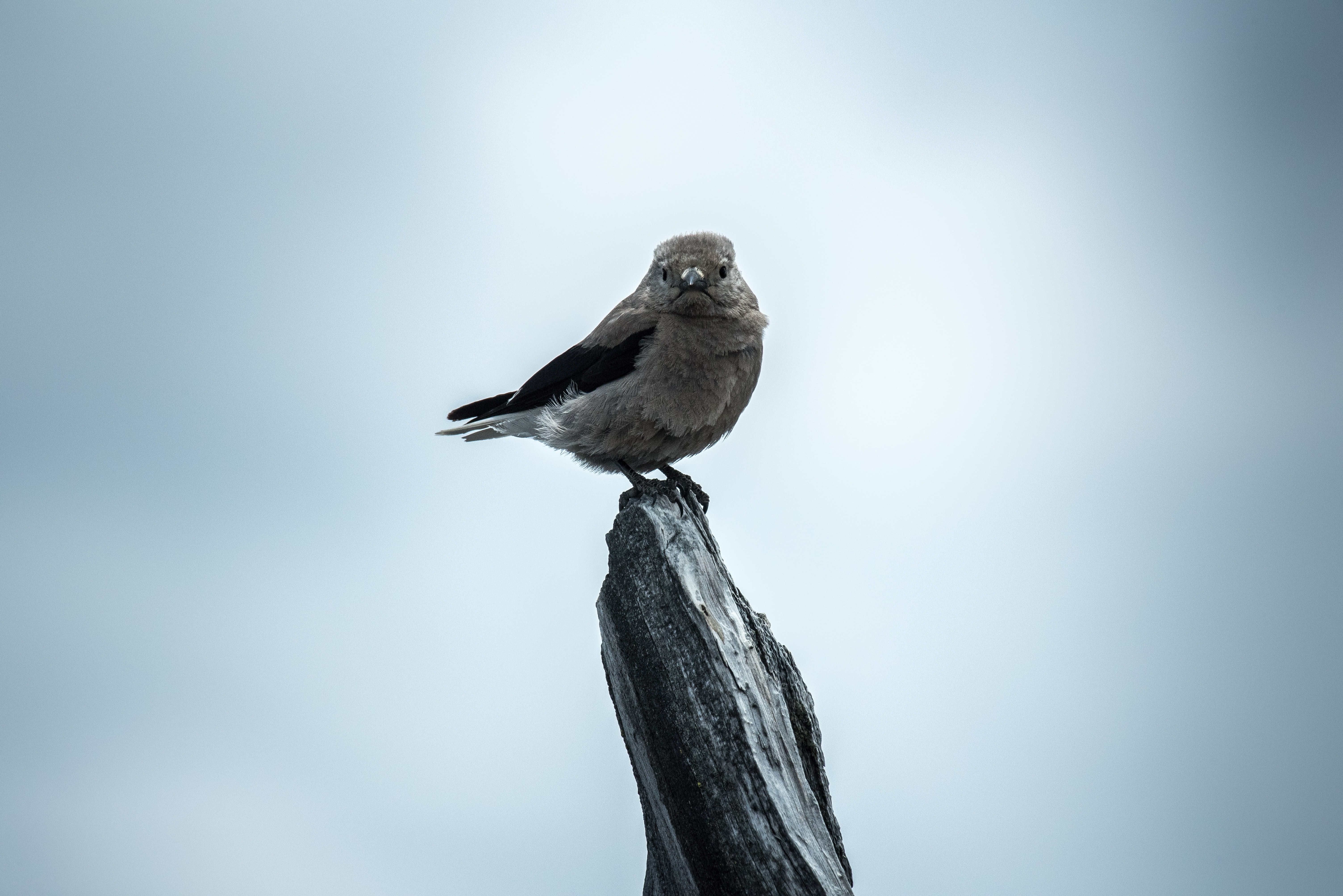 selective focus photography gray bird on branch of tree