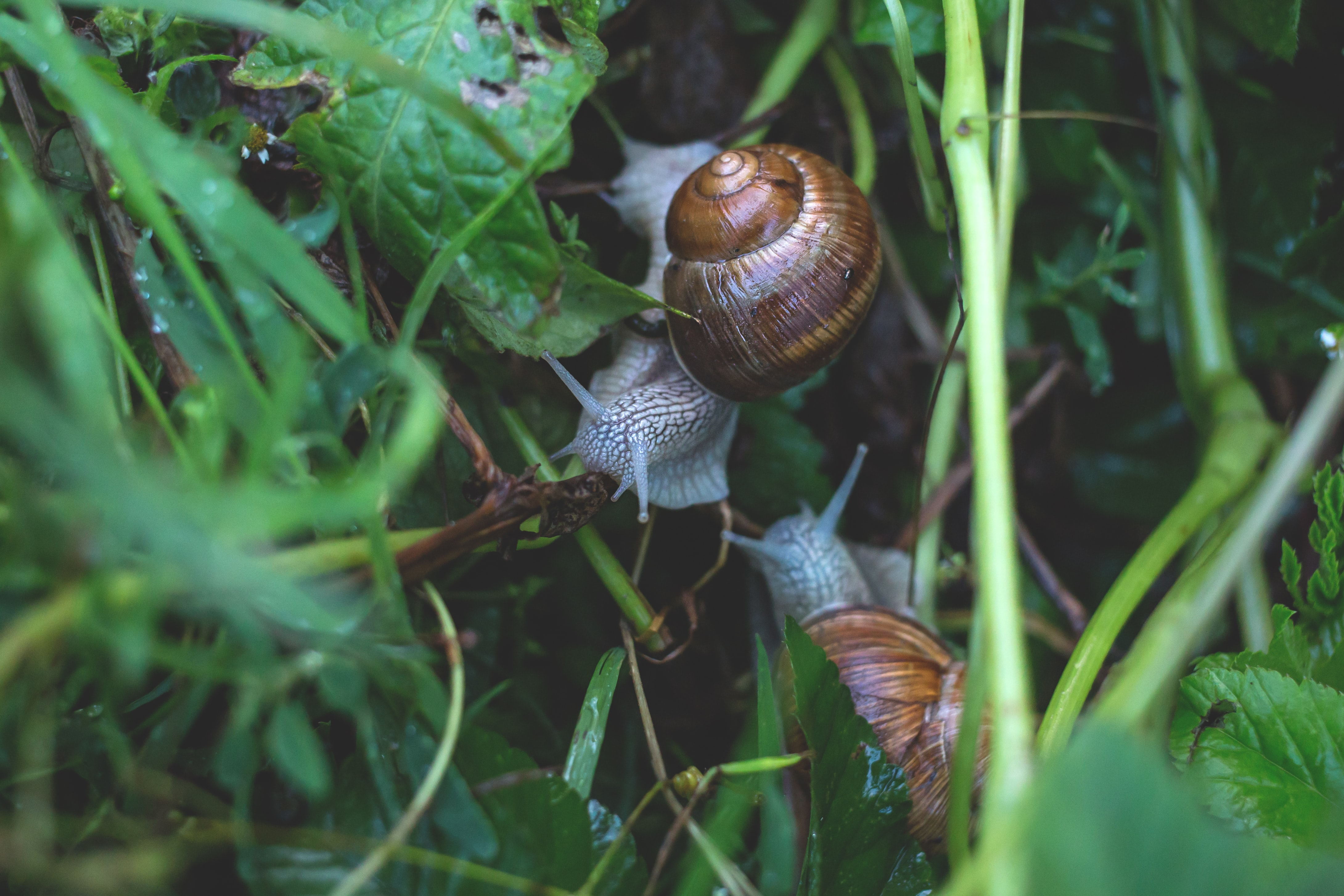 two snails surrounded by green leafed plant