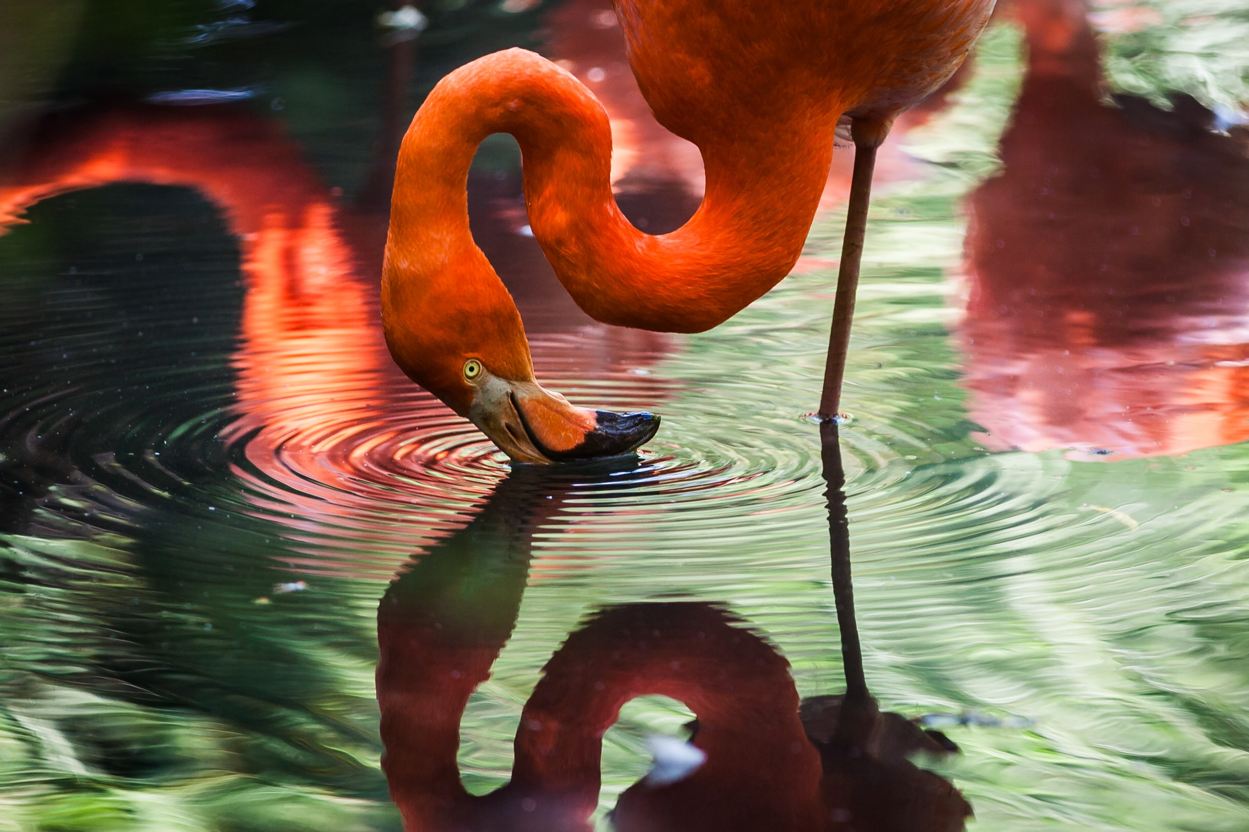 Image of: Eagle Pink Flamingo Unsplash Animal Wallpapers Pictures Download Free Images On Unsplash