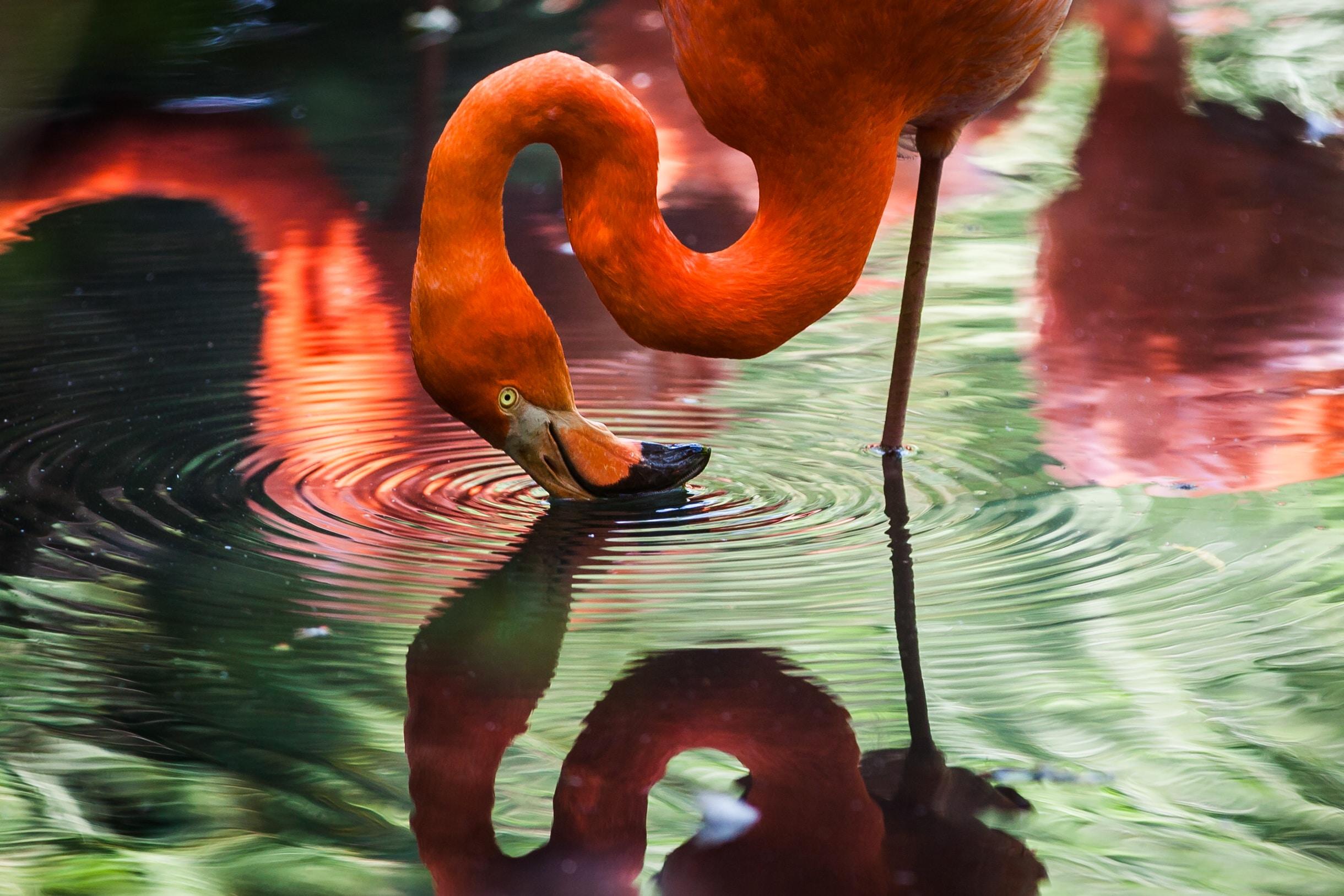 Birds Backgrounds free download Pixels HD