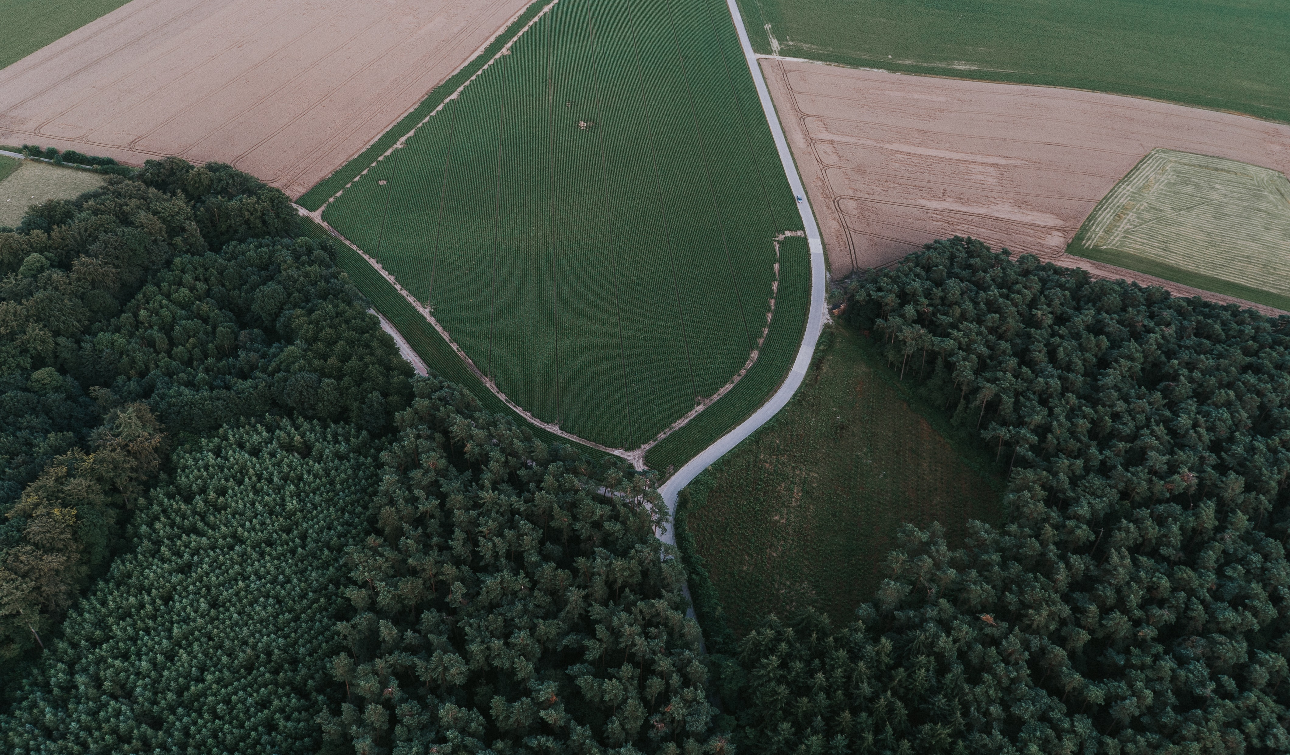 A road among green fields and evergreen woods in Ottignies