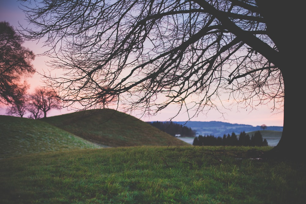 landscape photography of tree on hill