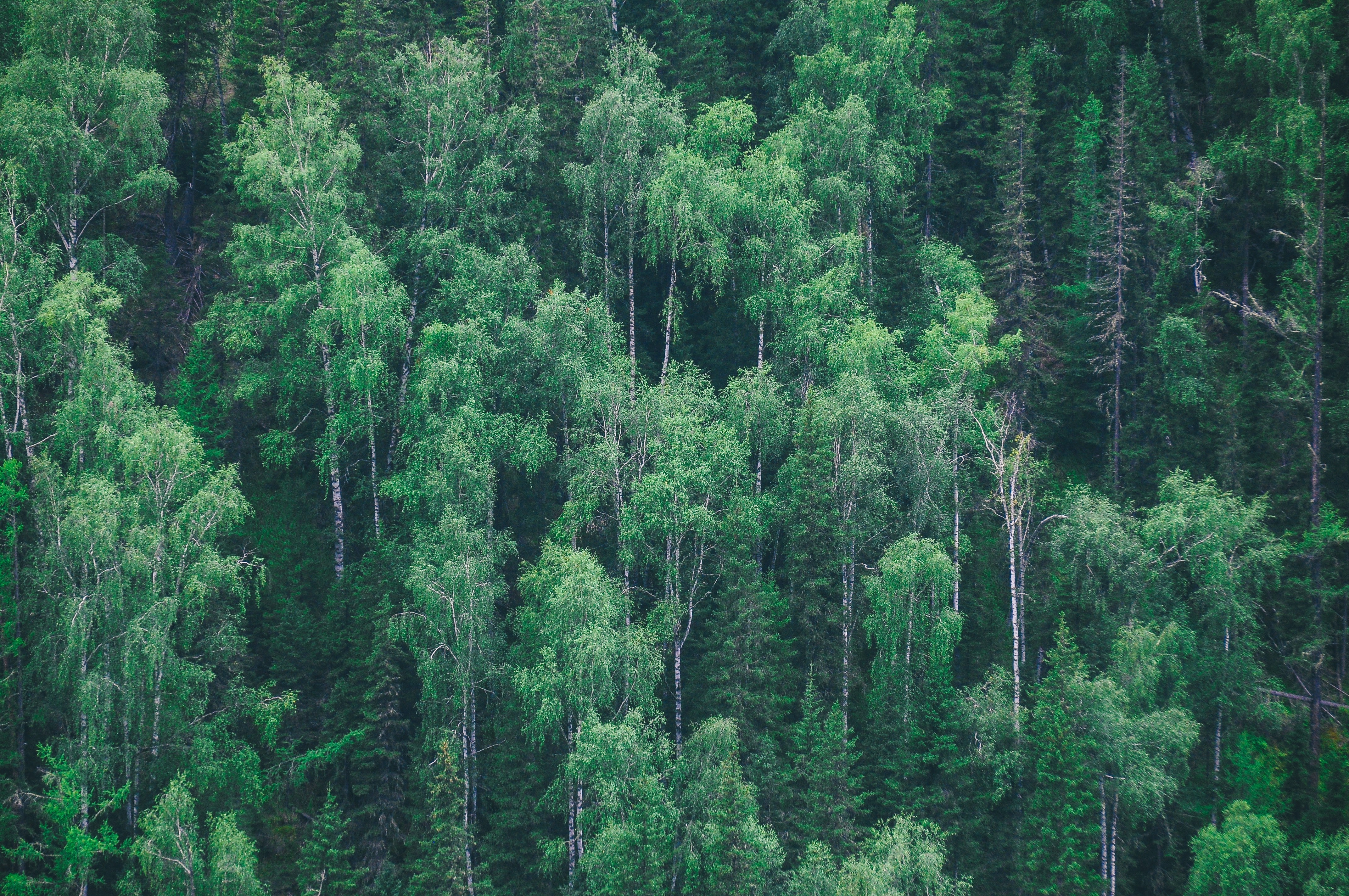 A high shot of tall trees growing on a slope