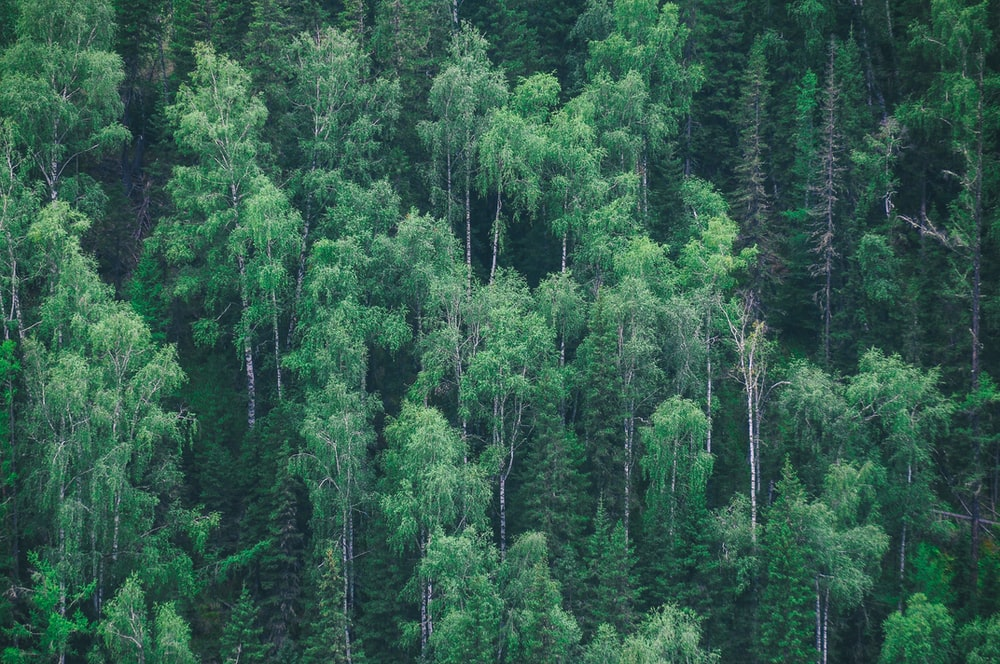aerial view of green leaf trees