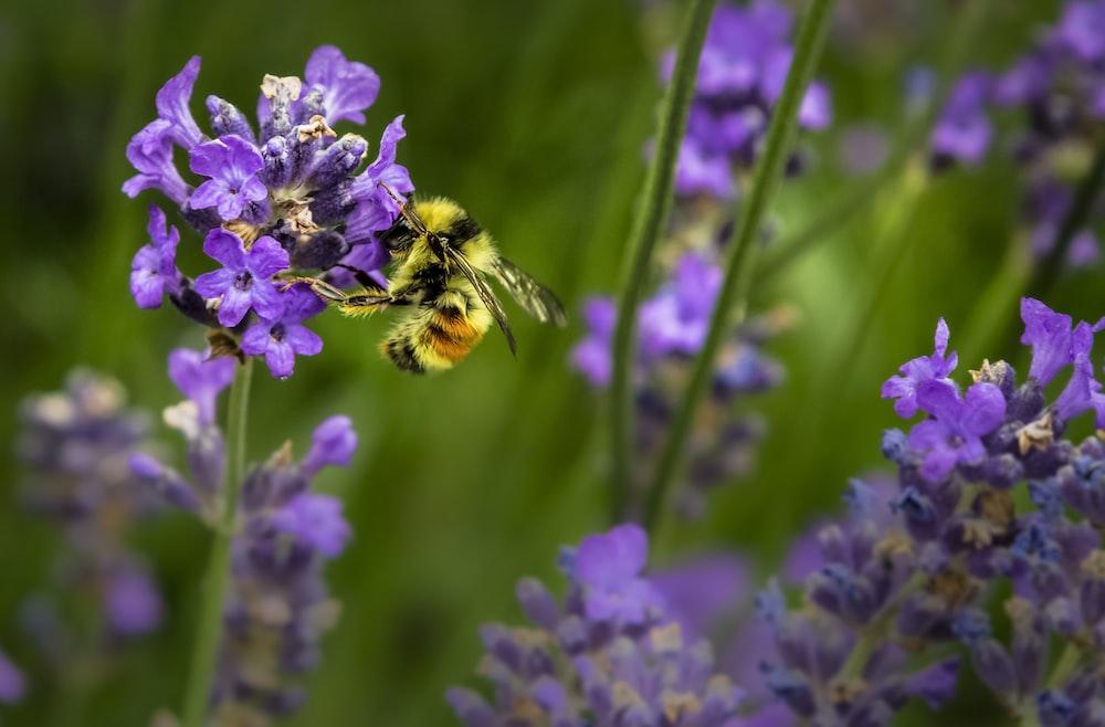 macro shot photography of bee