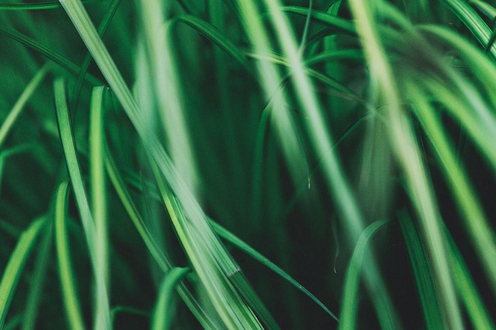tilt shift lens photography of green grass