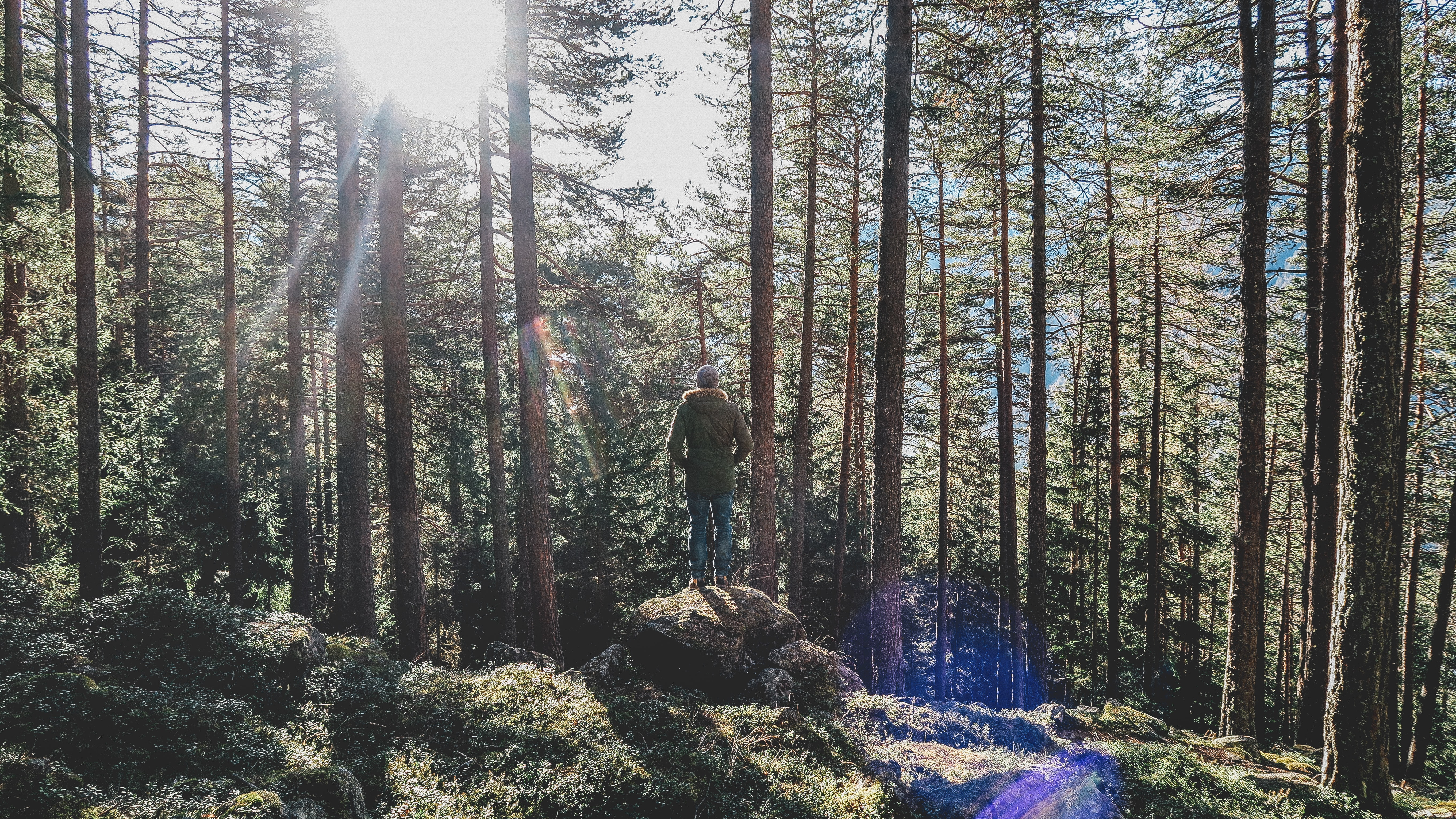 person standing in rock on forest during daytime