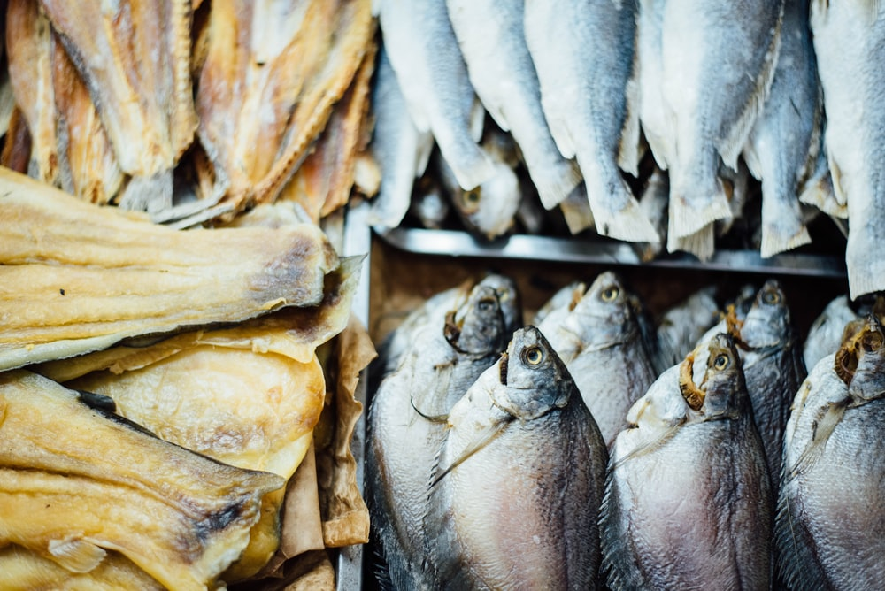 school of fish collage