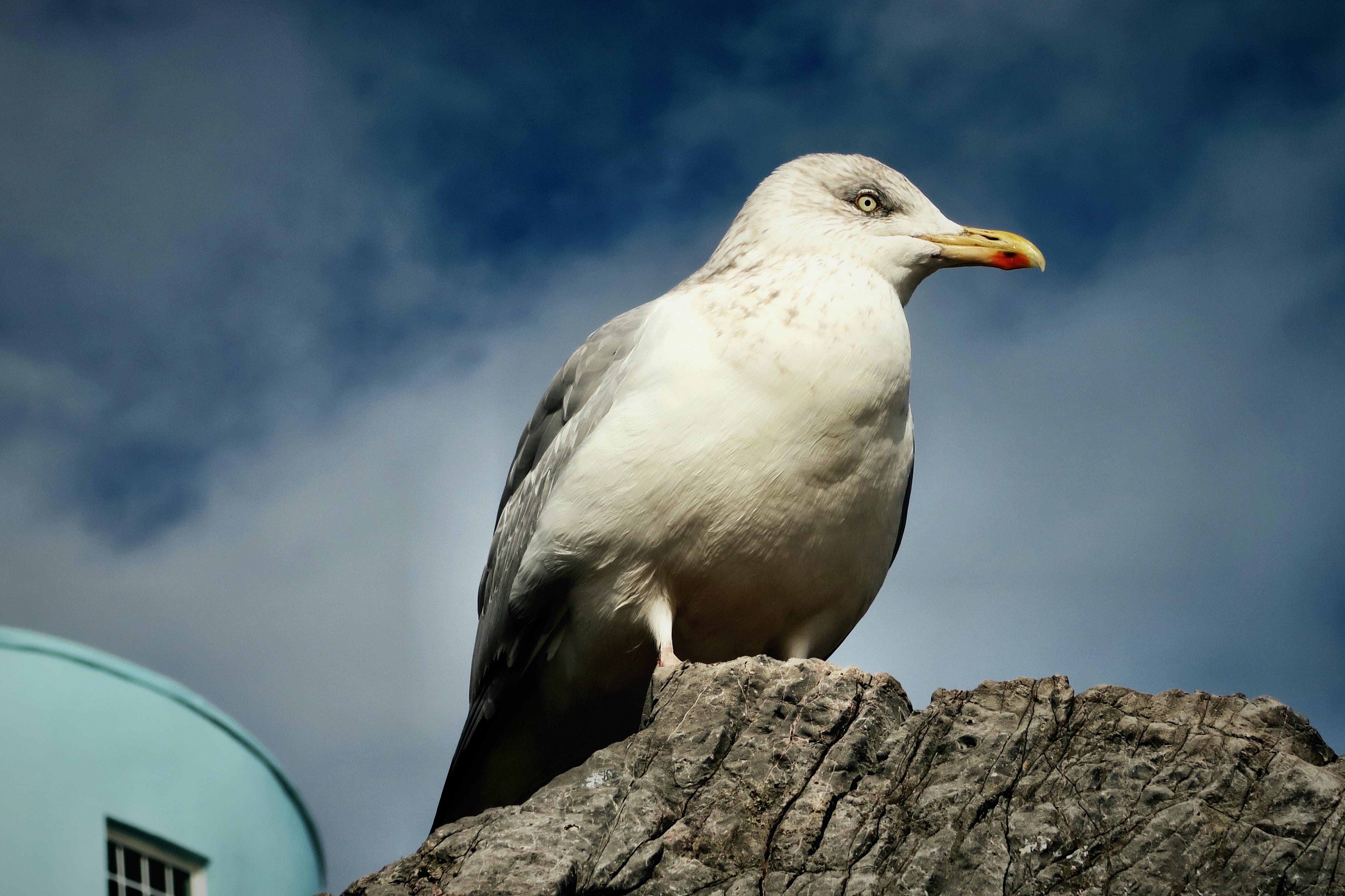 seagull on gray rock