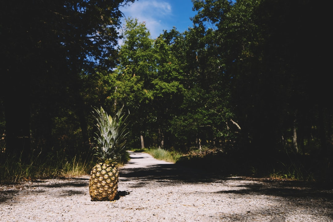 pineapple on path in forest