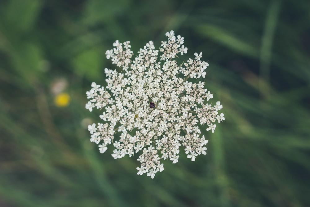 shallow focus of white flower