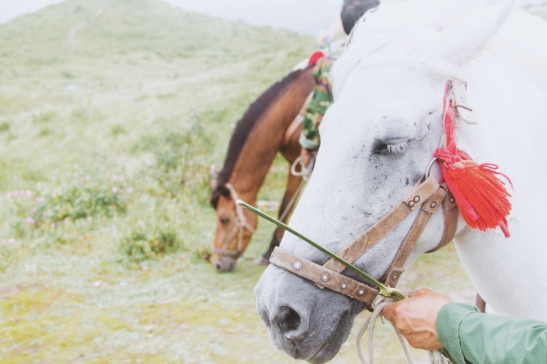 White horse's reins
