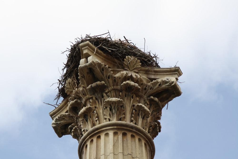 Spain, león and nest | HD photo by Luis Núñez (@lanc) on Unsplash