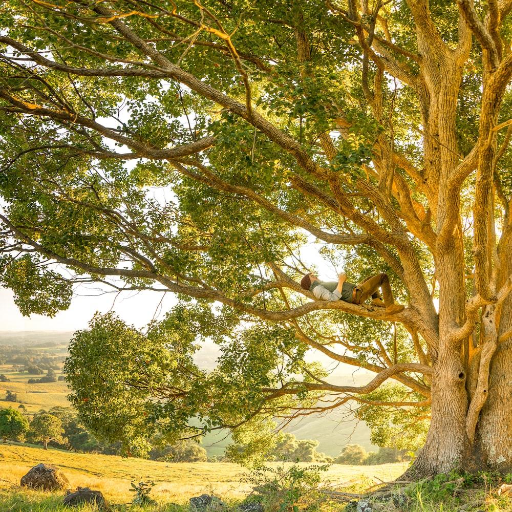 man laying on tree branch