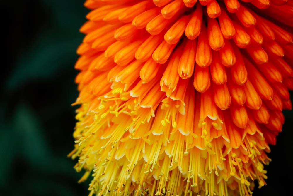 selective focus photography of orange and yellow petaled flower