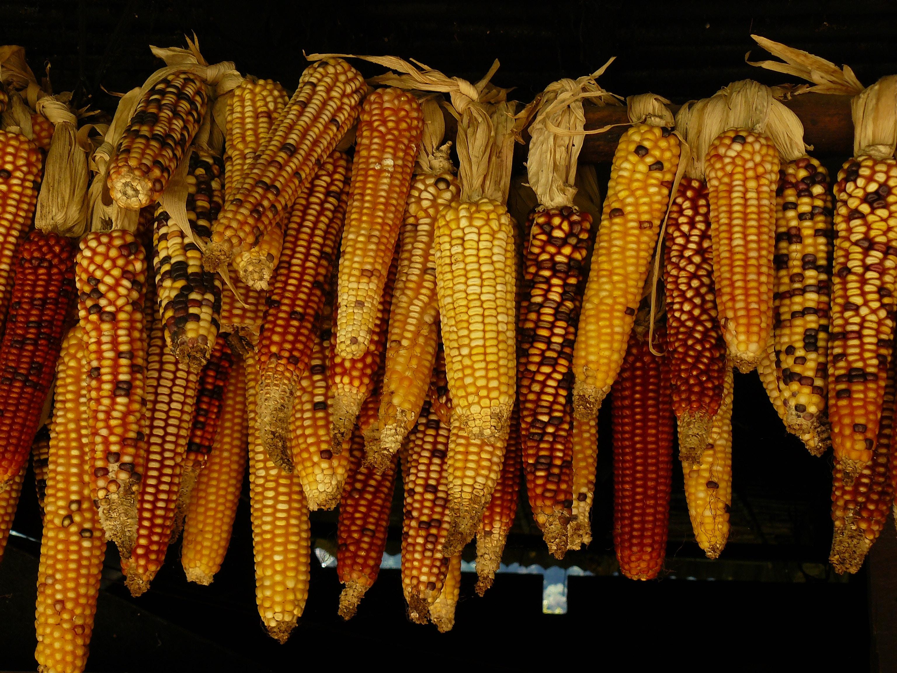 assorted corn stick lot