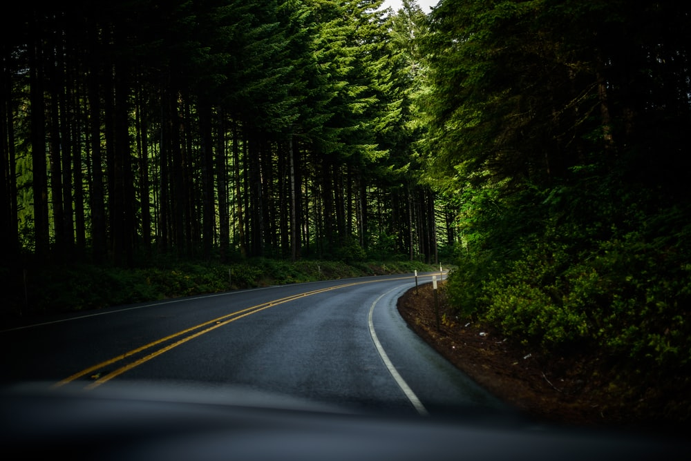 asphalt road surrounded green trees field