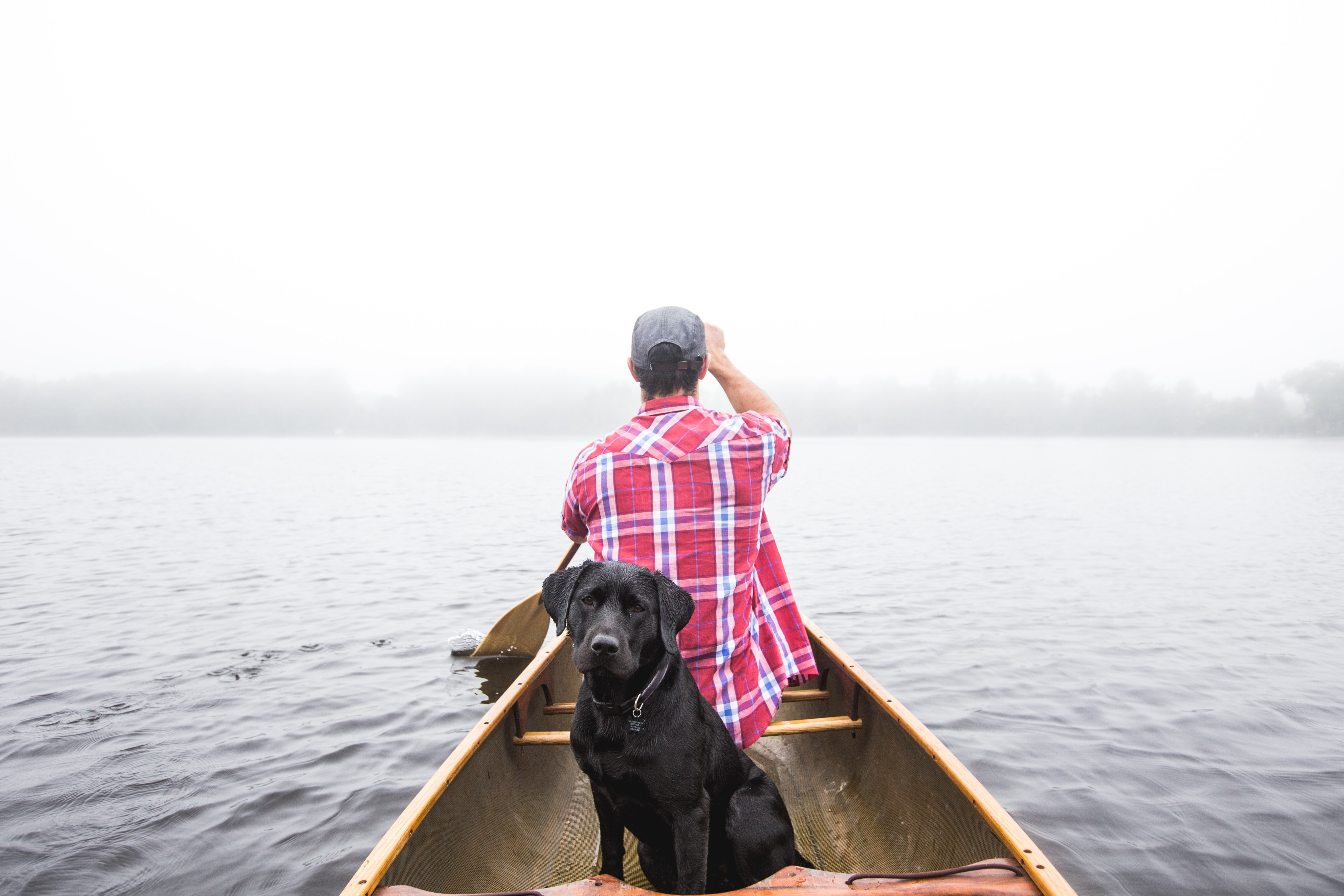 Labrador dog takes a boat ride with its owner on a calm lake