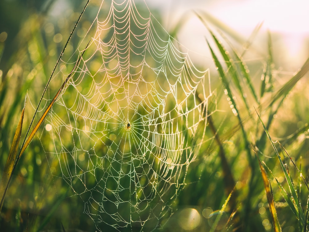 close shot of cobweb