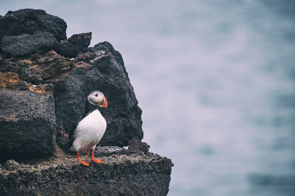 white and black bird on rock during daytime