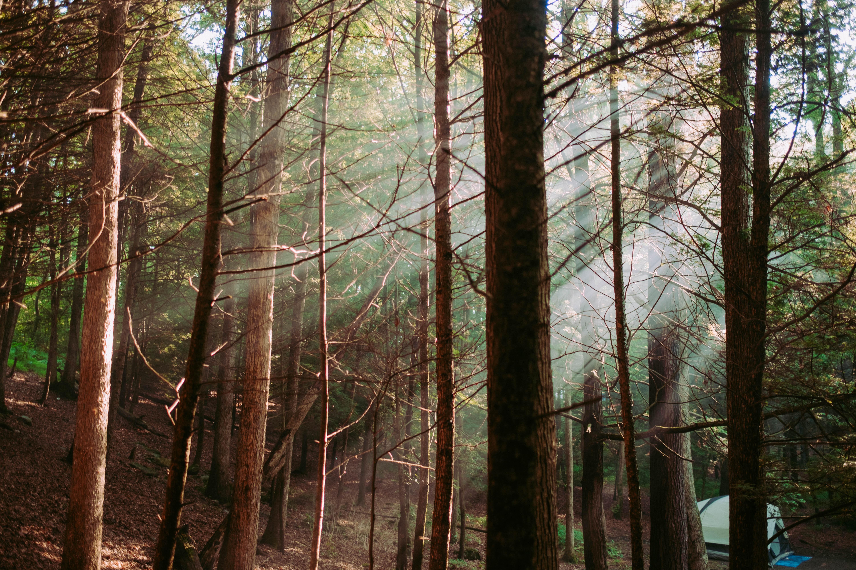 crepuscular light passing through trees