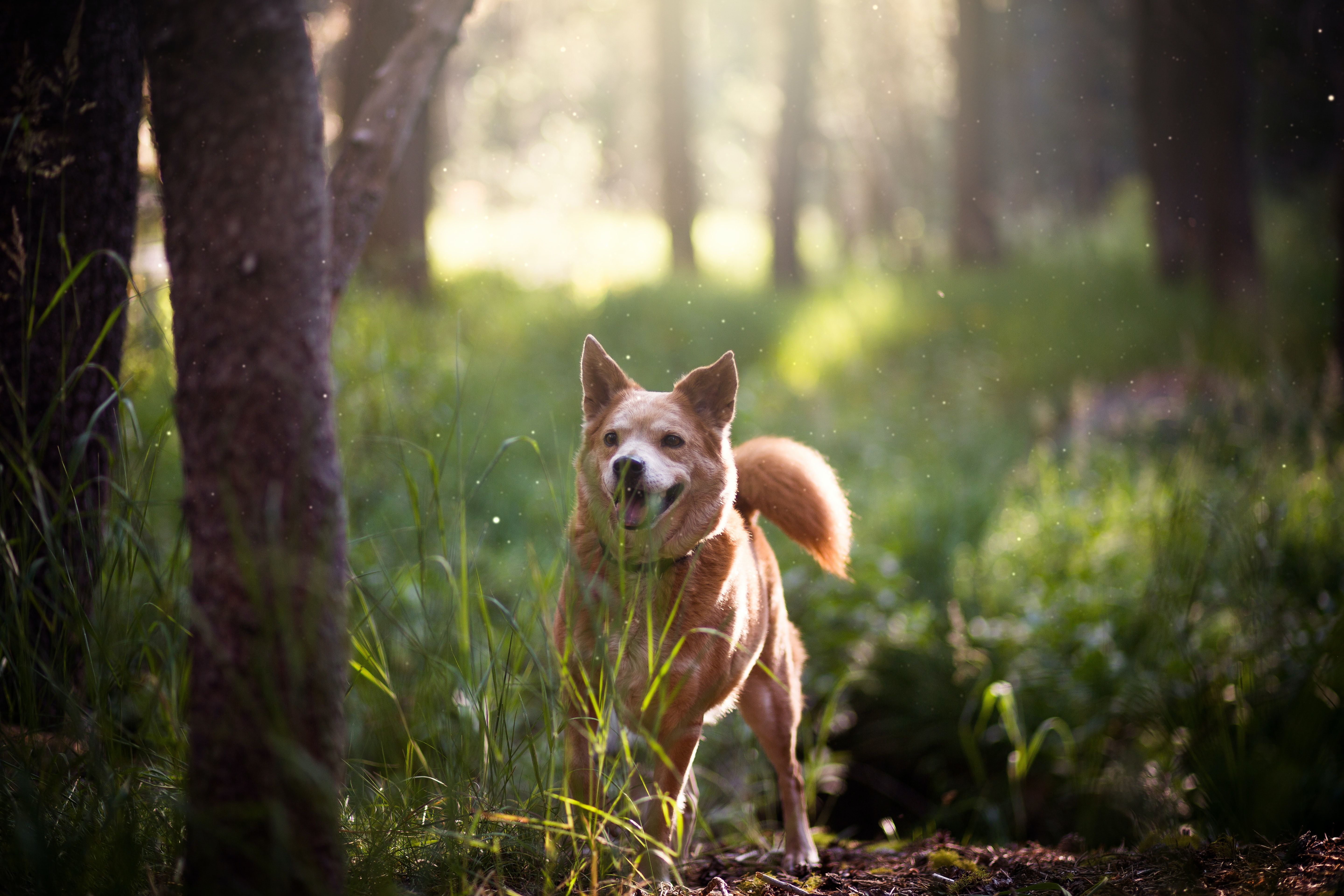 short-coated brown dog on green grass field