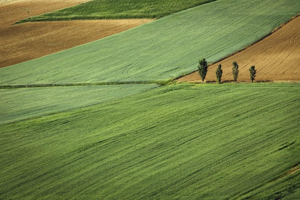 green grass field at daytime