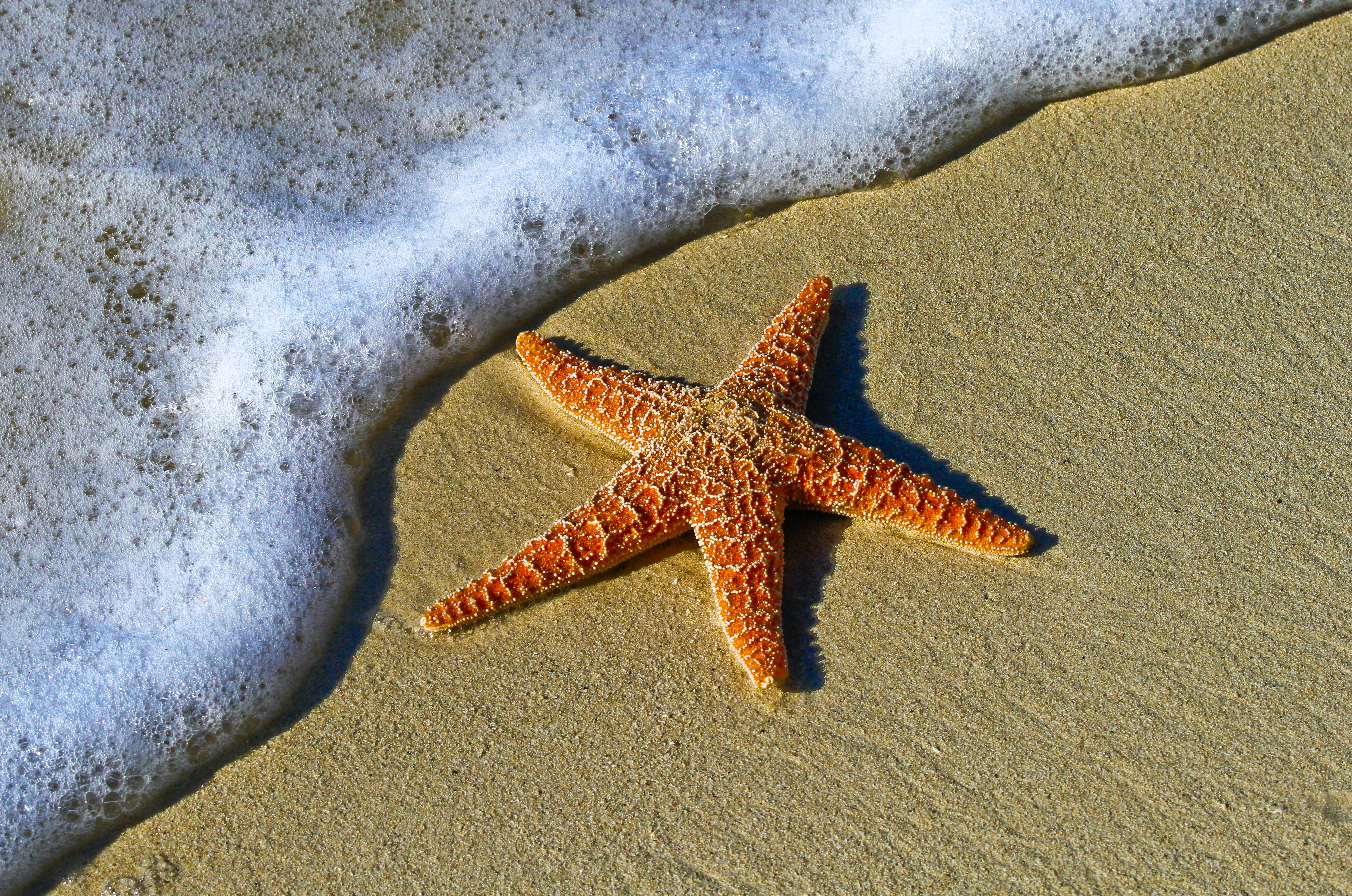 Starfish on a sand beach by the ocean foam at Key West