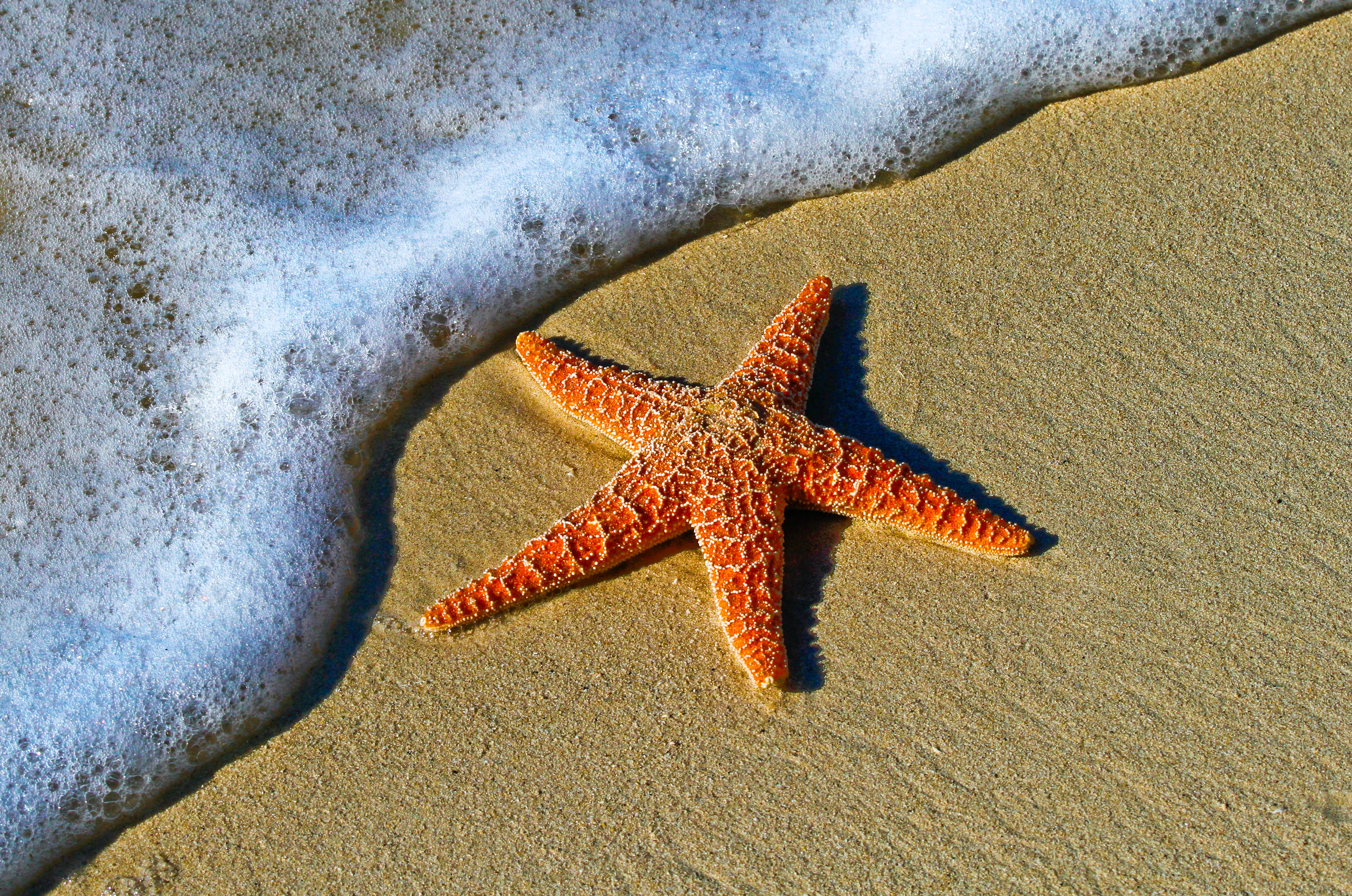 500+ Starfish Pictures | Download Free Images on Unsplash